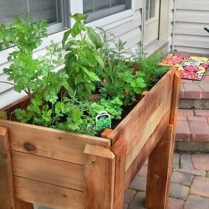 herb garden on patio