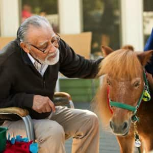 Joy's House partners with Agape Therapeutic Riding in Cicero, Ind., which brings miniature horses to the day care. (Photo by Brandon Smith)