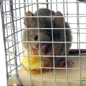 Can Rat Poison Kill You? | Angie's List