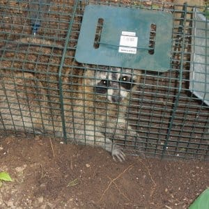 Animal removal