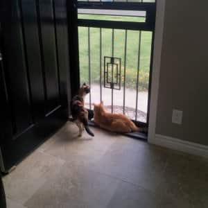 metal screen security door with cats looking outside