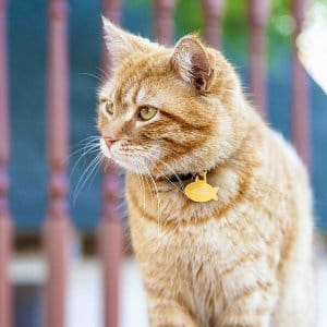 Warning Signs of Cat Heart Disease | Angie's List