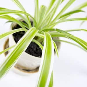 For long distance moves, it's recommended you find a new home for your house plants. (Photo by Eldon Lindsay)
