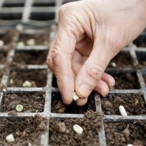 seed a garden