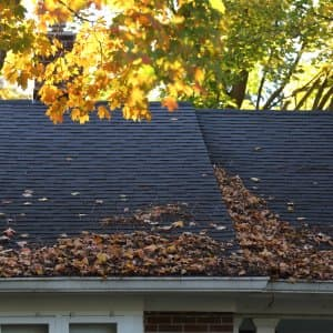fall leaves falling onto roof