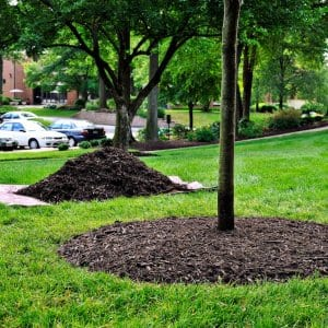 Tree mulch
