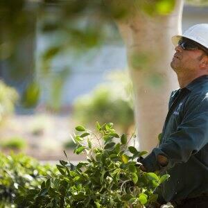 tree service professional