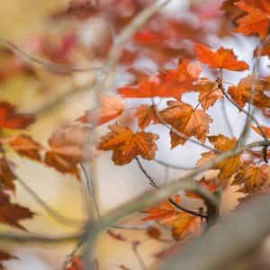 autumn leaves on tree (Photo by Brandon Smith)