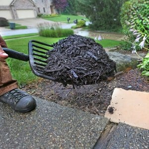 Someone laying shredded hardwood mulch with a pitchfork