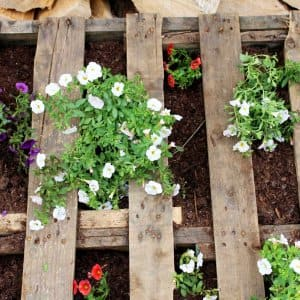 Create a vertical garden out of a pallet for a rustic twist. (Photo courtesy of Angie Holden/The Country Chic Cottage)