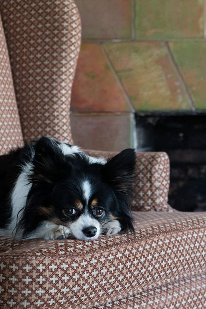 dog sitting in front of fireplace