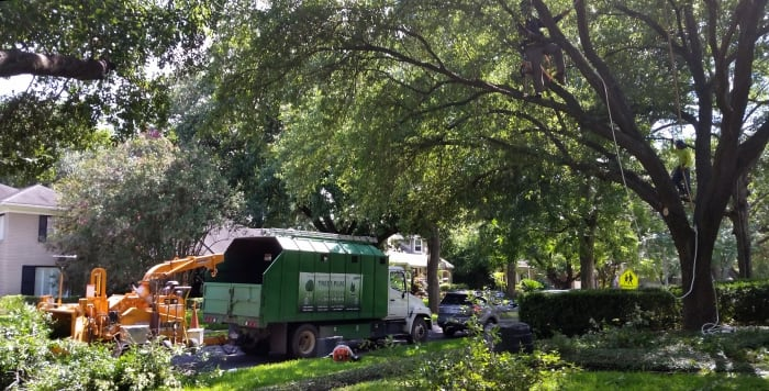tree crew working in yard filled with trees
