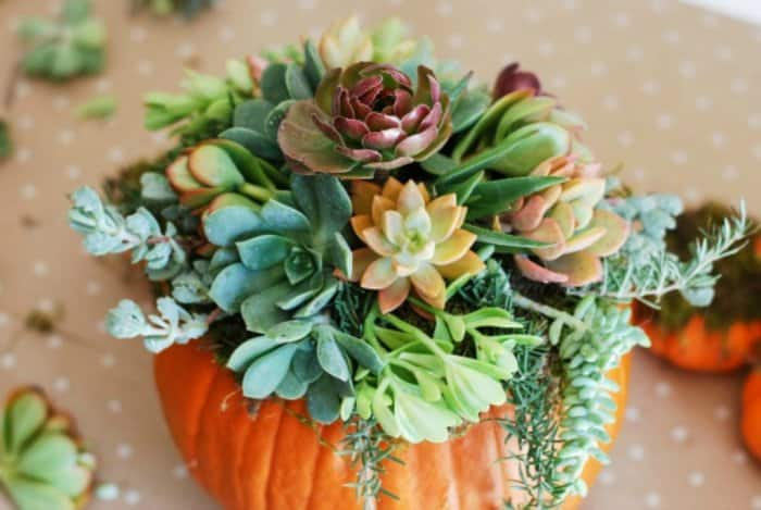 Add some greenery to your pumpkins by turning them into a succulent planter. (Image courtesy of Simply Happenstance)