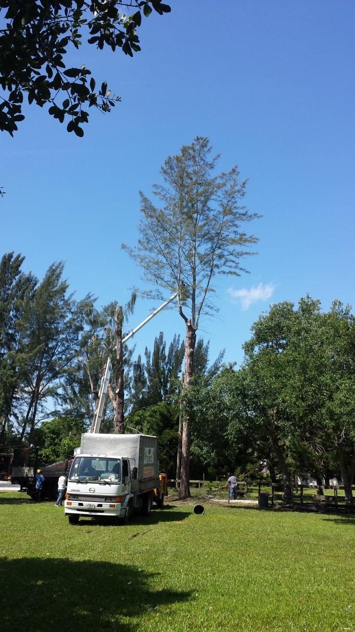 worker on top of cherry picker in tree