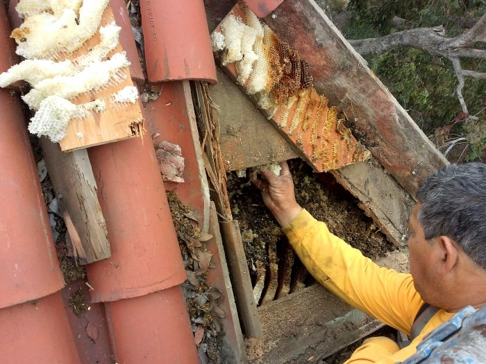 worker removing bee hive from roof of house
