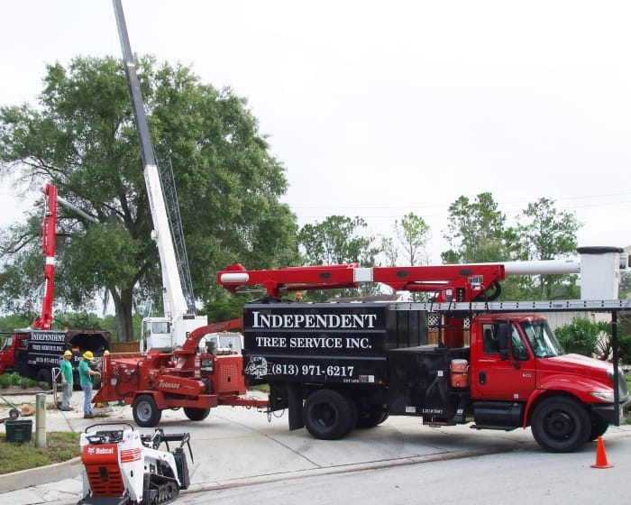tree trimming truck with crew standing nearby