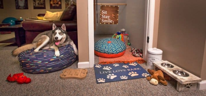 Under stairs space for dog