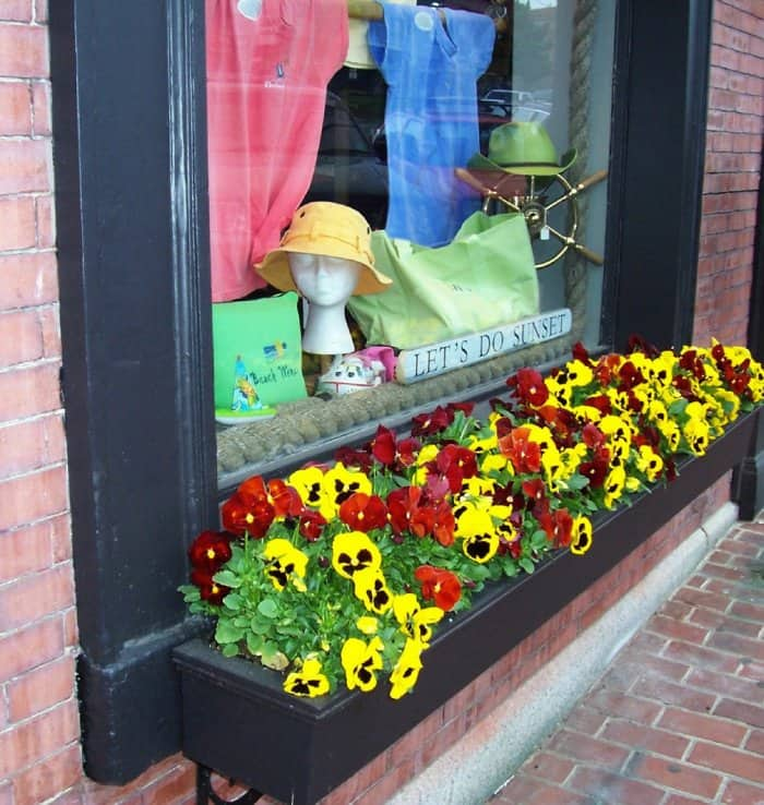 Pansies in a window box