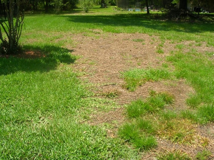 When member Kimberly B. complained about the condition of her lawn, the company responded by email and said they would not return to fix the problem. (Photo courtesy of Angie's List member Kimberly B. of Jacksonville, Fla.)