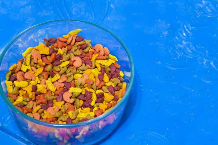 bowl of cat food with blue background
