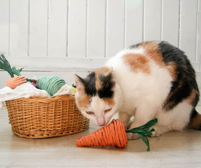 cat playing with DIY catnip toys