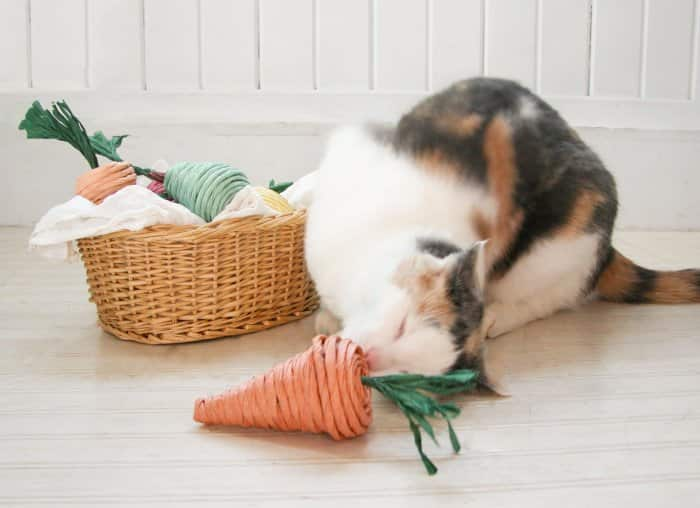 cat sniffing homemade cat toy