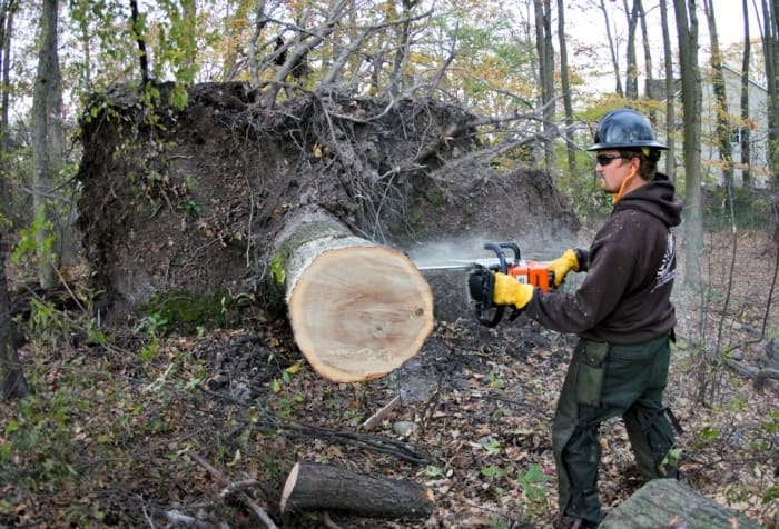 main cutting tree with chainsaw