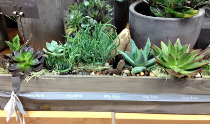 Succulents at King Florist in Austin