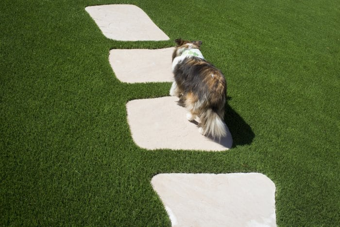 dow walking on stones on artificial grass