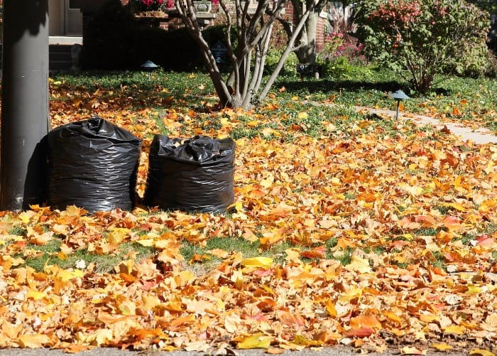 trash bags of leaves