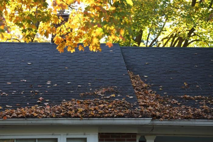 fall leaves gathered on roof, gutter