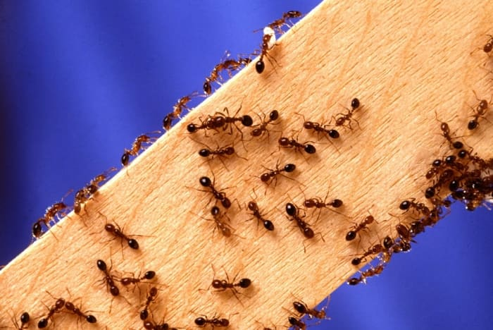 How To Get Rid Of Ants Angie S List