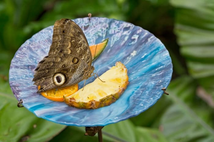 attract butterflies to yard
