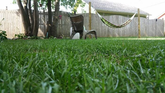 hammock in yard