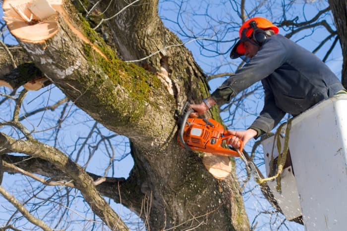 man using saw to trim tree