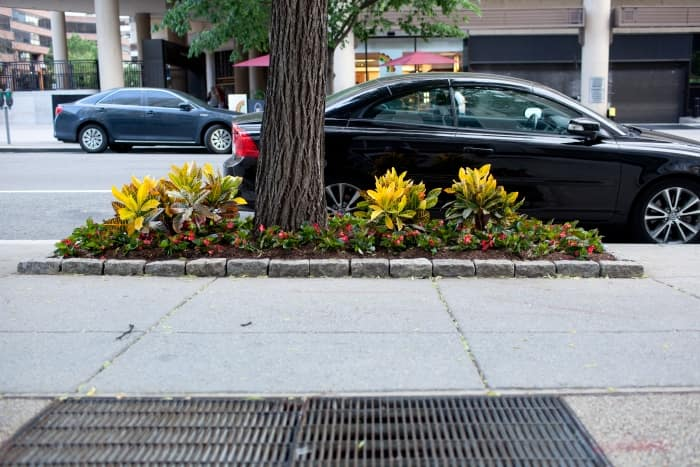parkway planting