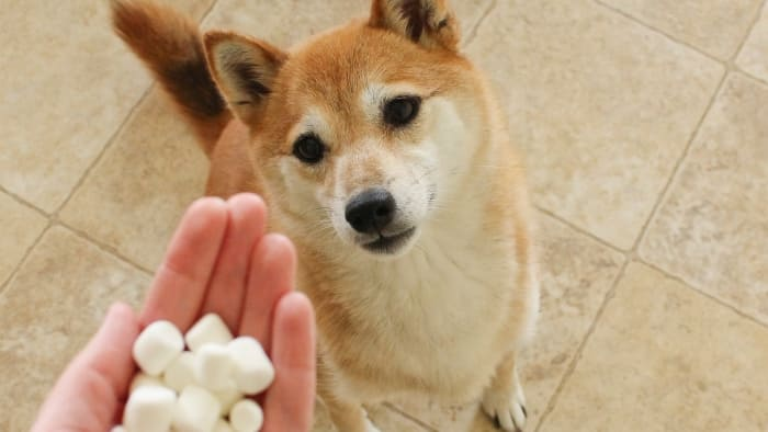 Can Marshmallows Be Given To Dogs