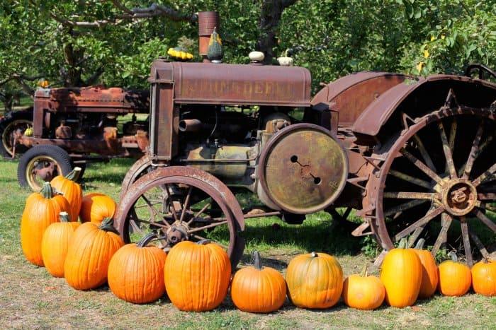 pumpkin display around vintage tractor