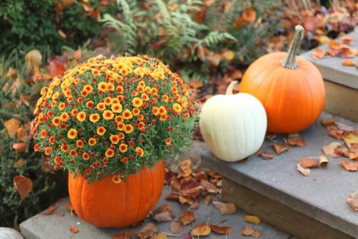 pumpkin planter and pumpkins on porch steps