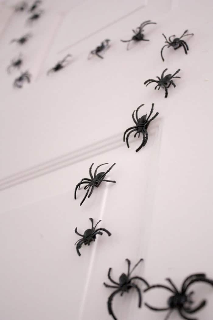 spider trail on door