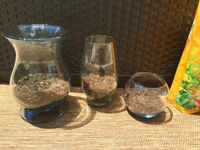 soil in DIY terrarium
