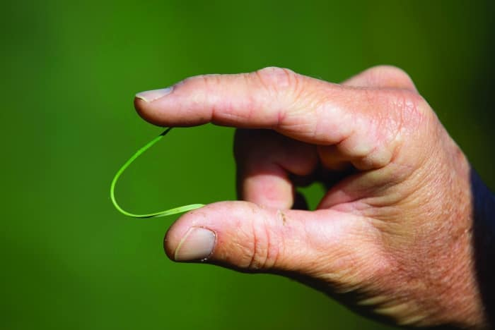 pine needle bending