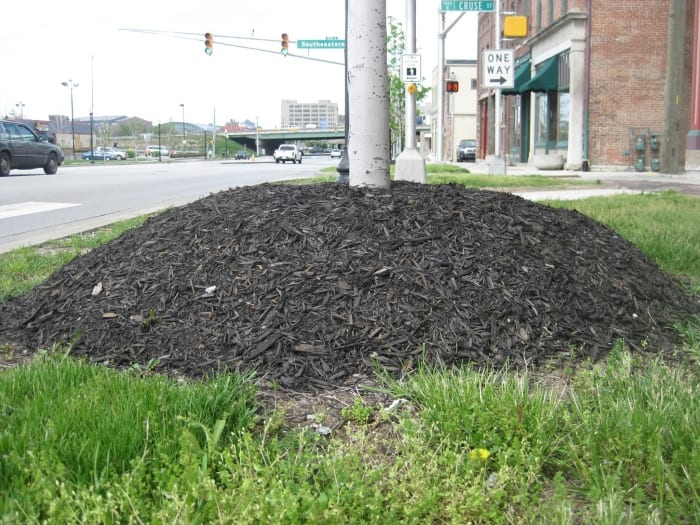 Mulch pile at tree base