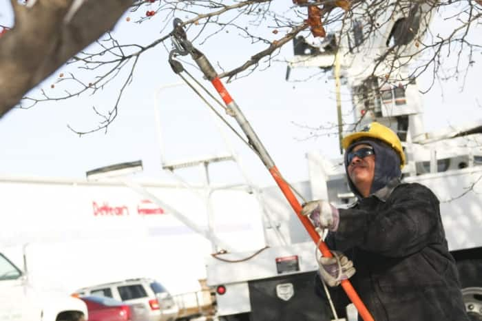 A tree service employee trimming a tree