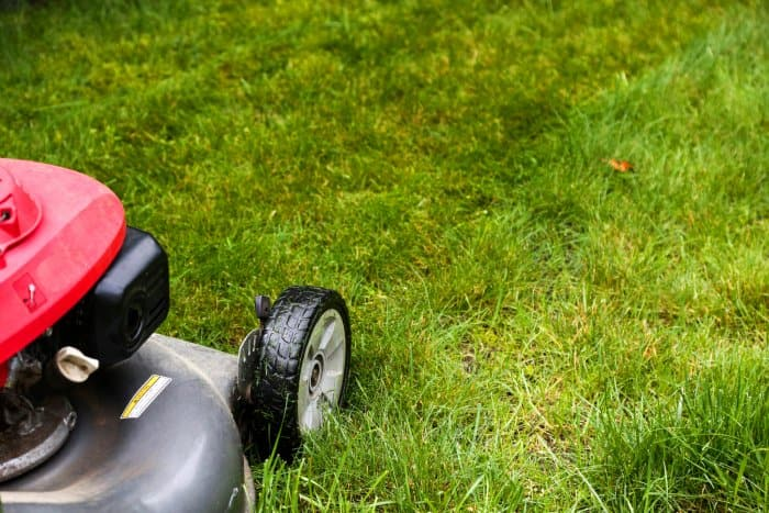 Backyard Transformation: Lawn Care Tips | Angie's List