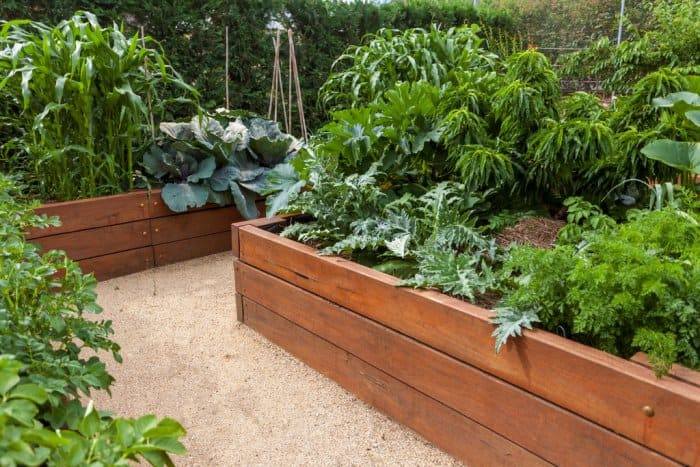 Raised Garden Beds With Wooden Beams And Large Plants