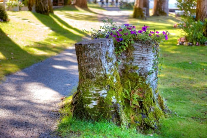 Tree stump with flowers growing out of top