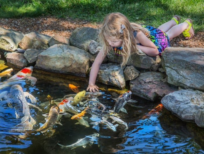 Girl playing with koi fish in small pond