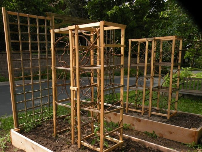 Grow vining plants in your raised garden bed with some lattices or tomato cages. (Photo courtesy of Angie's List member Marisha C.)