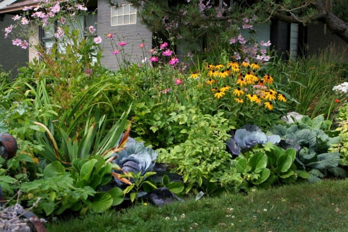 Landscaping With Cabbage And Kale Plants.
